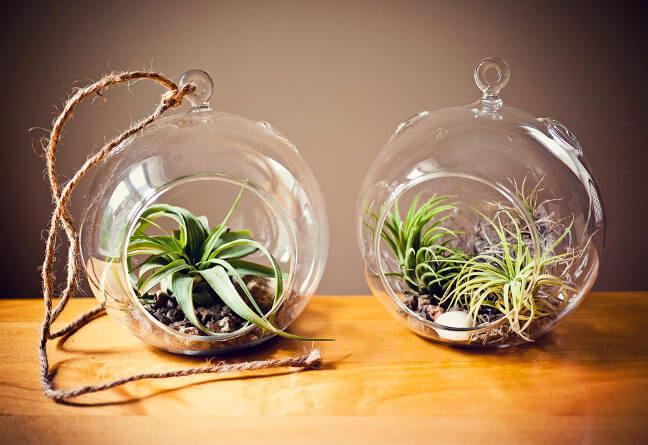 houseplants-improve-air-3