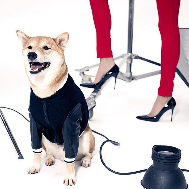 Bodhi Menswear Dog