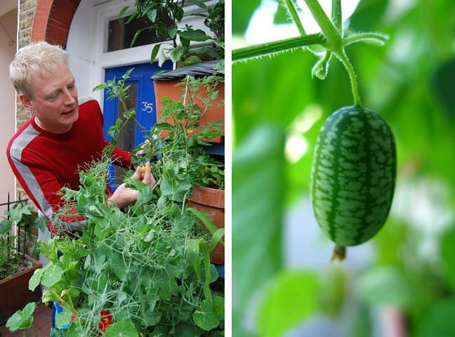 Mark Ridsdill Smith, garden blogger