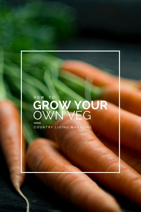 How to grow your own veg | magazine.co.uk