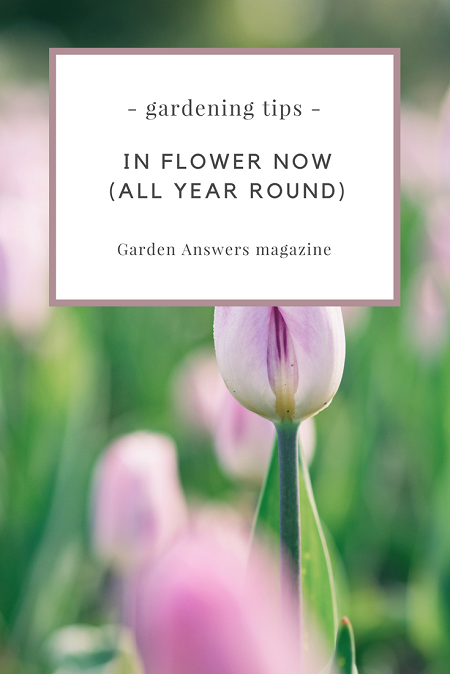 In flower now, all year round | magazine.co.uk