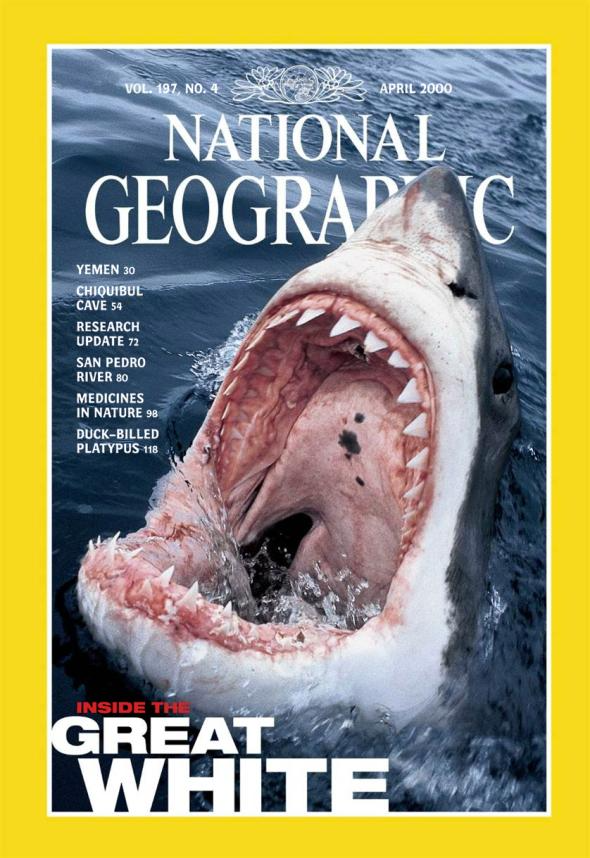 Great White 2000 National Geographic Cover
