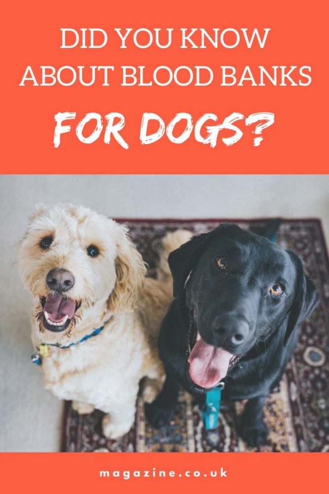 Did You Know About Blood Banks for Dogs